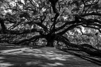 The womping oak.